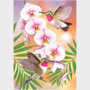 Anna's Hummingbirds with Phalaenopsis