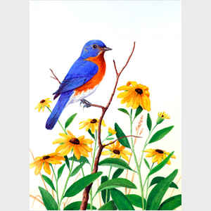 Bluebird and Blackeyed Susans
