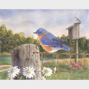 Bluebird on Fence