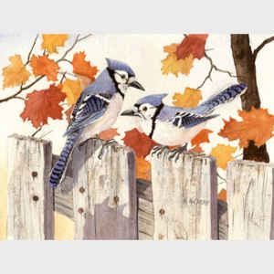 Bluejays on the Fence