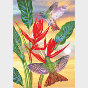 Buff Bellied Hummingbirds and Red Christmas Heliconia