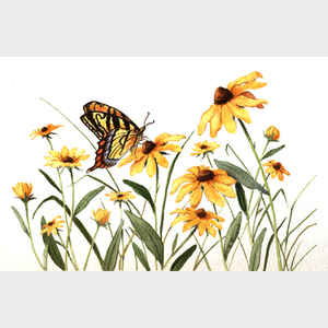 Butterfly and Black-Eyed Susans
