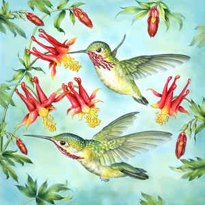 Calliope Hummingbirds