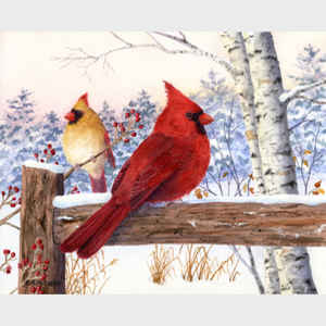 Cardinal Pair with Birch
