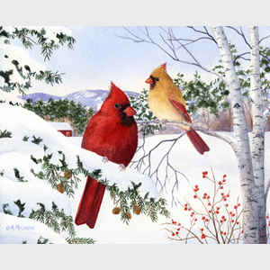 Cardinals and Hemlock Tree