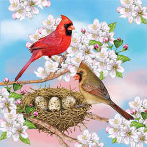 Cardinals in Spring