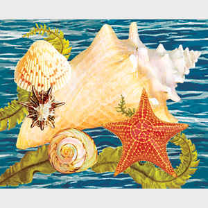 Conch, Starfish and Cockle II