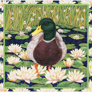 Duck in Water Lilies