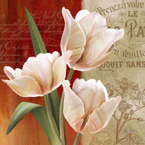 Abby Abby White French Tulips