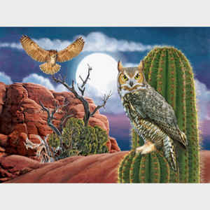 Great Horned Owl in the Desert
