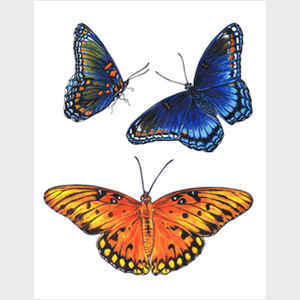 Red Spotted Purple and Brilliant Eye Jewel Butterflies