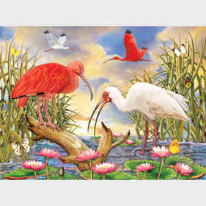 Scarlet and White Ibis