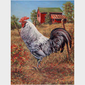 Silver Laced Rock Rooster