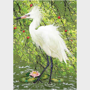 Snowy Egret Under Plum Tree