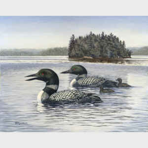 Richard Richard De Wolfe Water Birds
