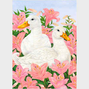 White Ducks in Lilies
